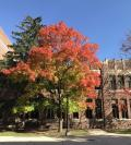 tree with fall leaves outside of Lorch Hall